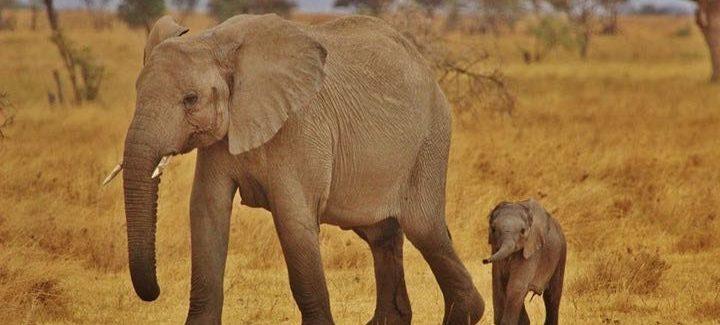 parc national Afrique du sud