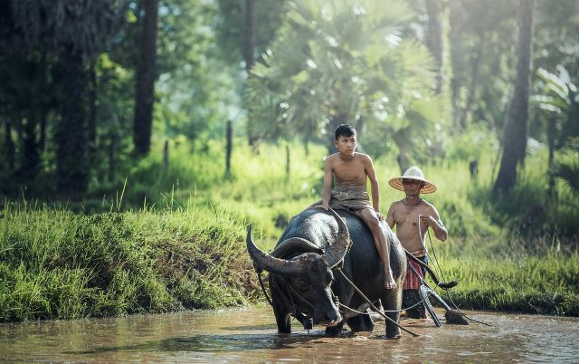 Conseils de voyage les plus utiles pour l'Indonésie